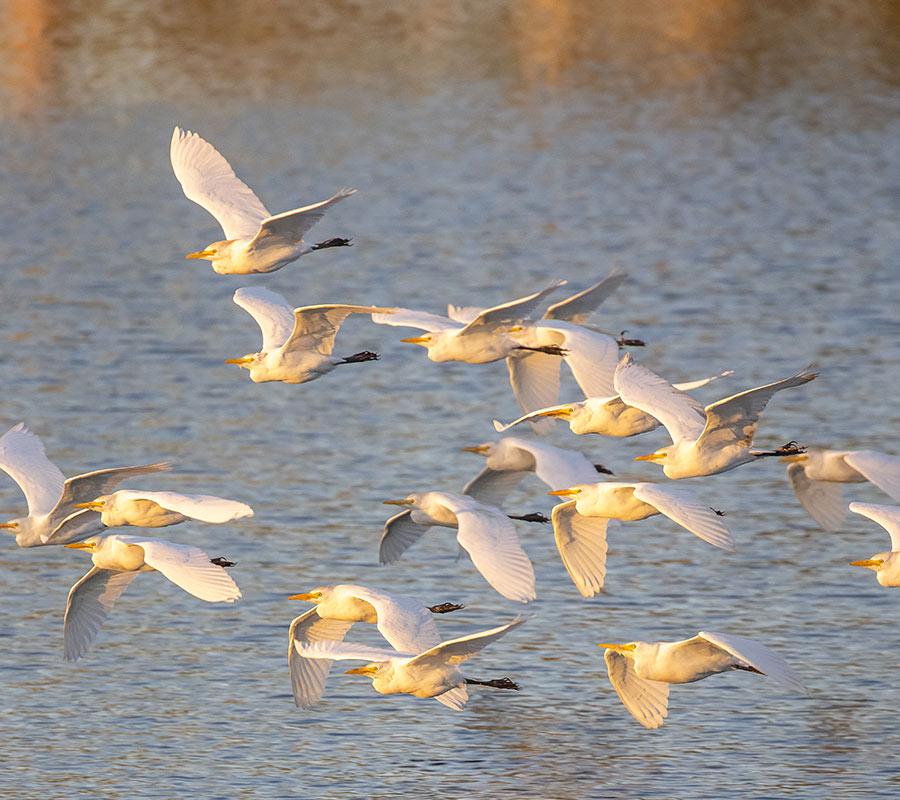Birds flying over water at Berkshire Lakes | Master Association